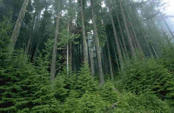 forest[1].jpg